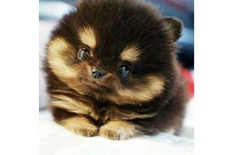 Mini chien : 40 petites boules de poils à croquer !