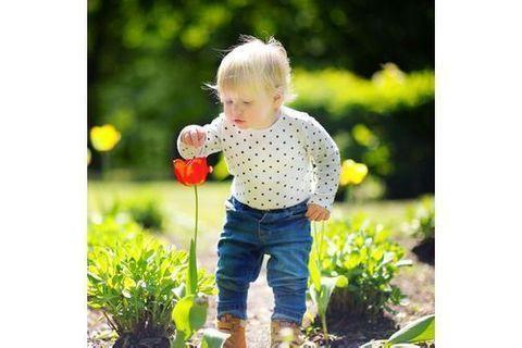 Les plantes toxiques pour Bébé