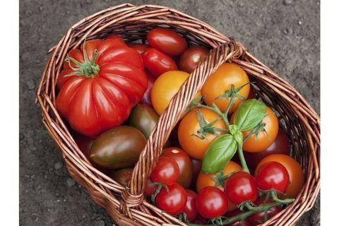 Quelle tomate pour quelle recette?