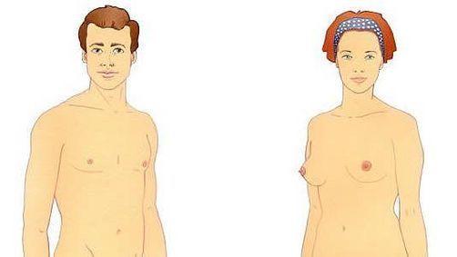 Anatomie externe (H/F)