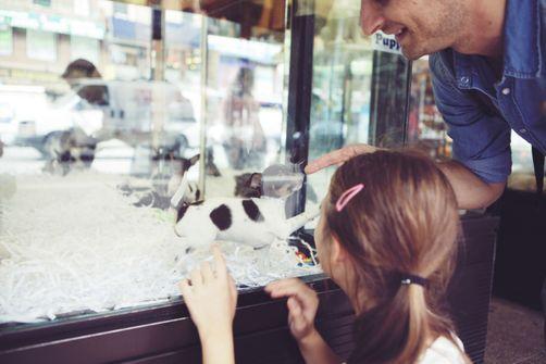 Animaux de compagnie : les chiens souvent achetés, les chats trouvés ou donnés