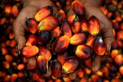 L'Assemblée maintient l'huile de palme parmi les biocarburants, les écologistes furieux