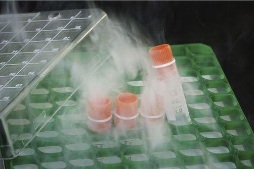Vitrification d'ovocytes