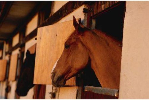 phénylbutazone viande de cheval,