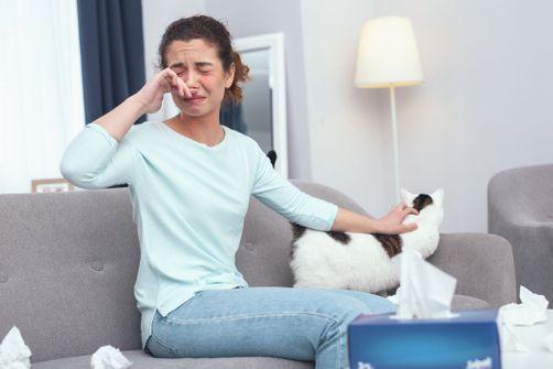 Allergie aux poils de chat : un vaccin bientôt disponible ?