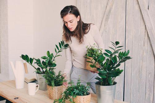 efficacite-mitigee-plantes-interieur-depolluantes