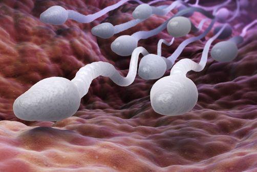 déclin du taux de spermatozoïdes