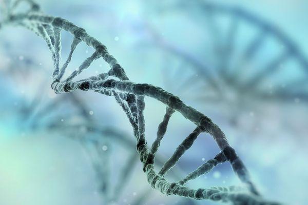 information-genetique-wd