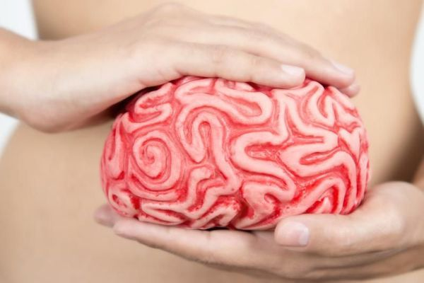 intestin-deuxieme-cerveau-wd