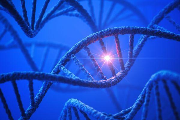 maladies-genetiques-modes-de-transmission-wd