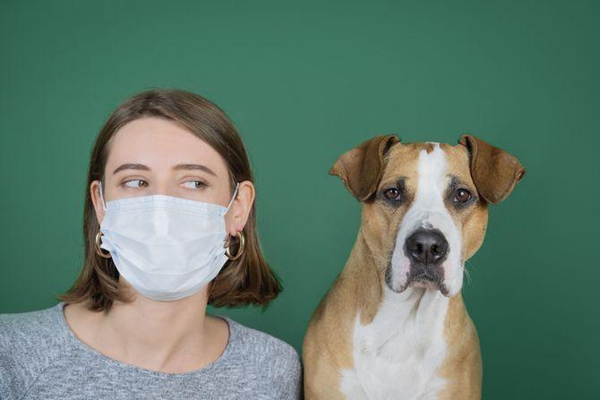 Les animaux de compagnie peuvent-il attraper ou transmettre le coronavirus ?