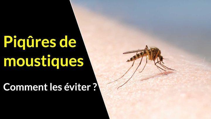 conseils anti moustique