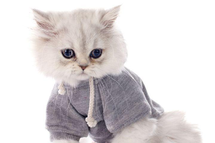 vetements pour chat