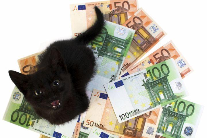 budget pour un chat