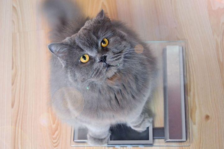 Mon chat perd du poids
