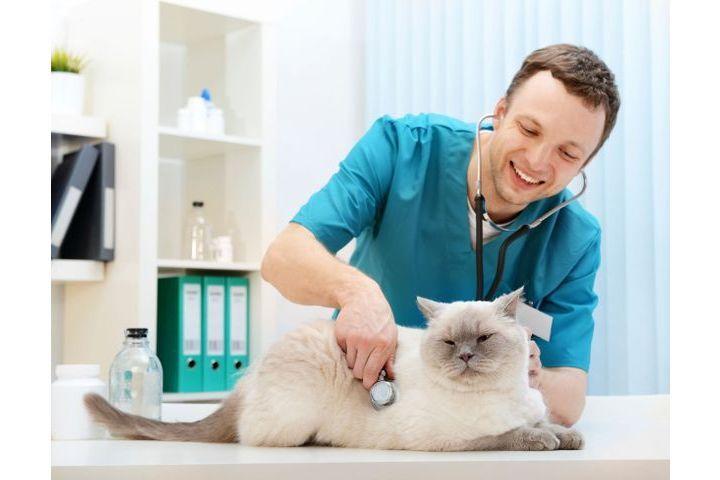 choisir vétérinaire pour chat