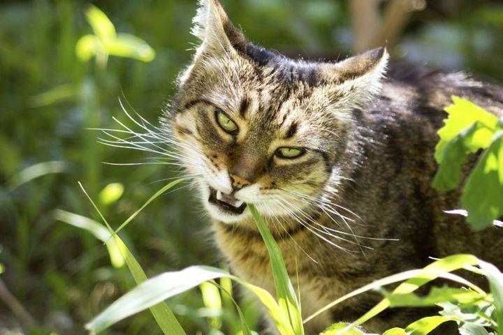 médecines douces pour les chats