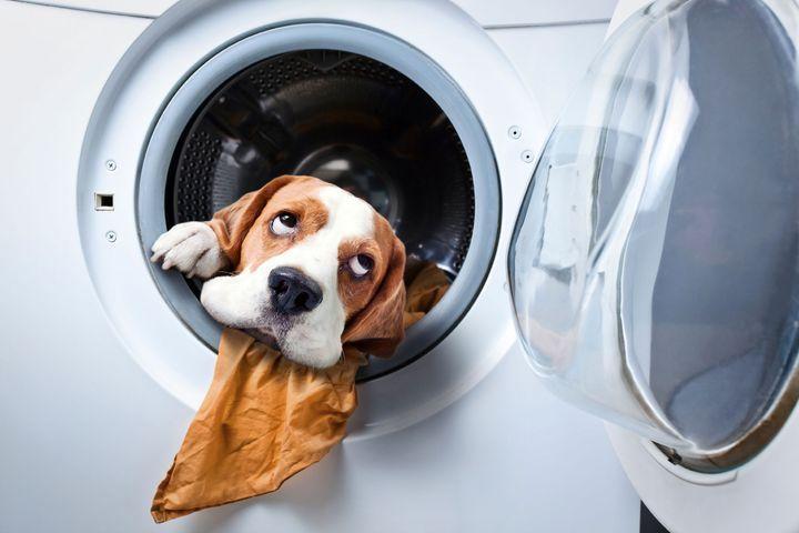 dangers de la maison pour son chien