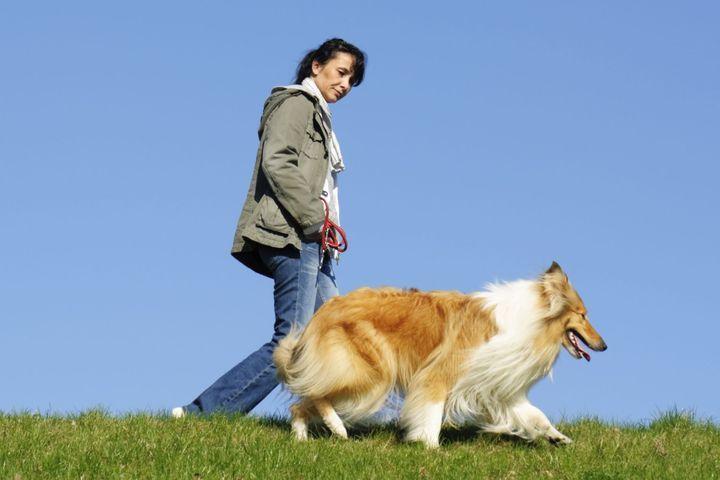 apprendre à son chien à marcher au pas