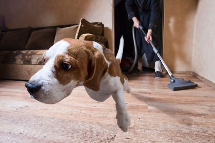 Habituer son chien aux bruits