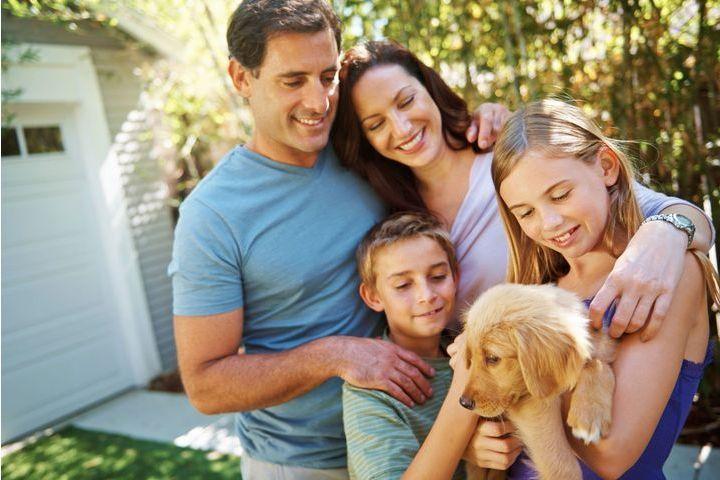 le chien et ses amis