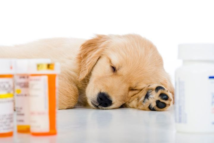 vermifuge pour jument diabetes gestacional