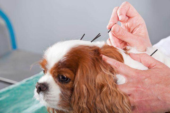 médecines douces pour les chiens