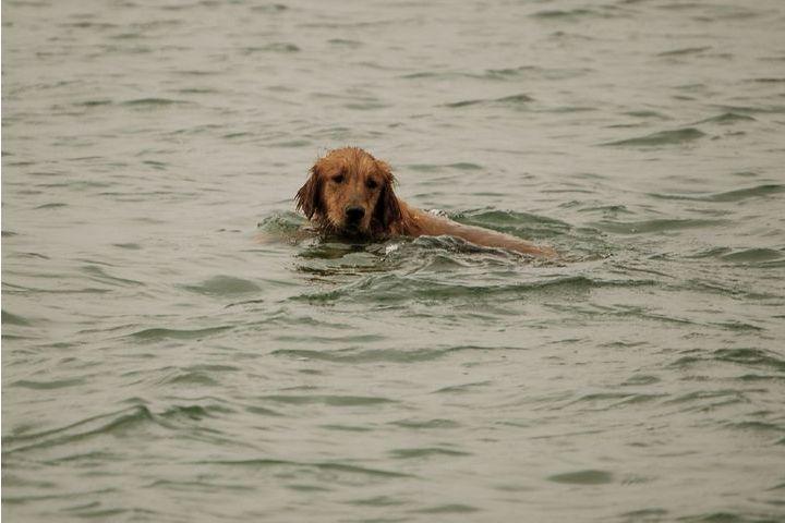 noyade du chien