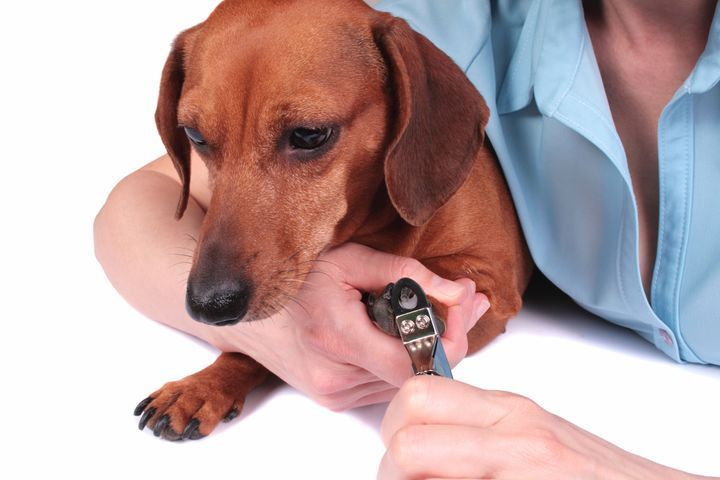 soin des griffes de son chien