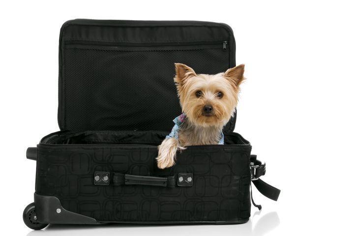 chien stressé par voyages