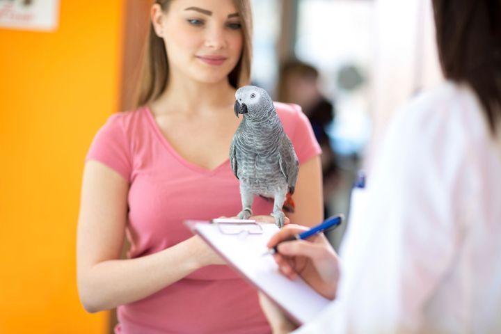 carences alimentaires chez l'oiseau