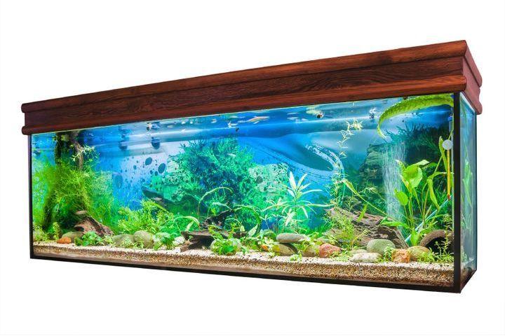 algues et plantes d'un aquarium