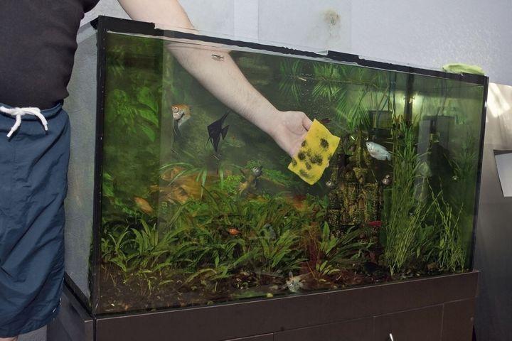 l'entretien d'un aquarium