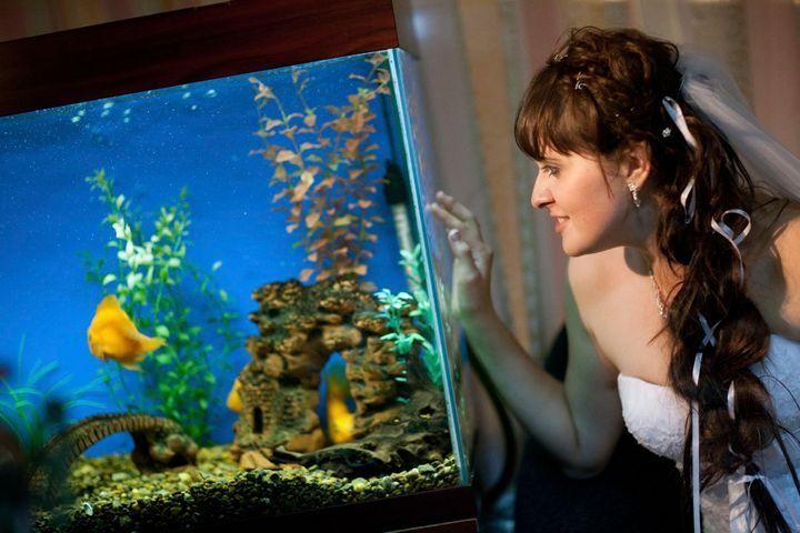 décoration d'un aquarium