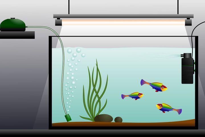 Le matériel d'un aquarium