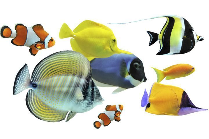 espèces de poissons d'aquarium