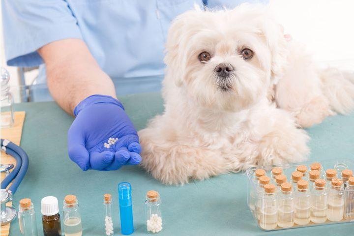 Homéopathie pour mon chien