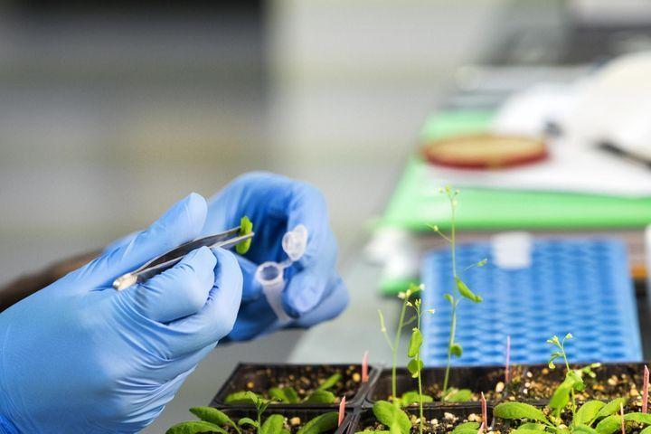 Phytothérapie : où en est la science et la recherche ?