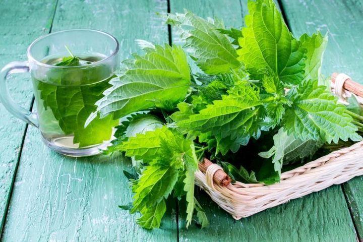 Ortie : tous les bienfaits nutritionnels des orties - Doctissimo