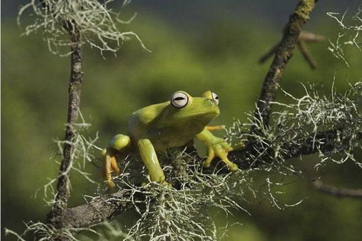 Rêve de grenouille