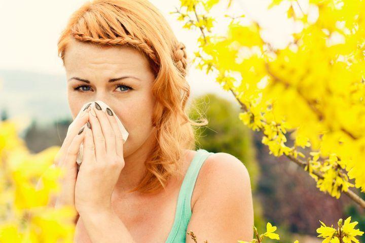 Pollens de Méditerranée