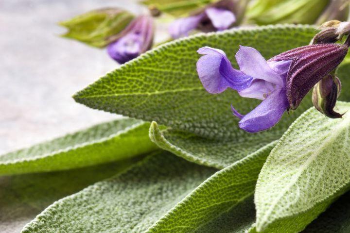 Sauge sclarée : une huile essentielle utile pour la ménopause ...
