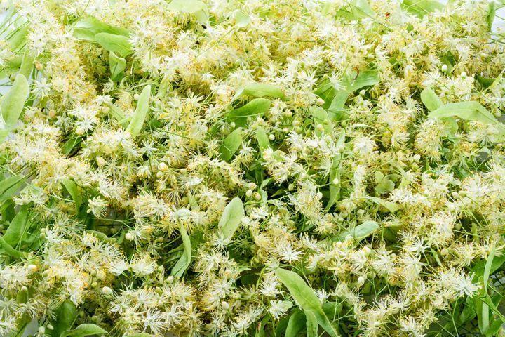 Tea tree : utilisation et bienfaits de l'huile essentielle d'arbre ...