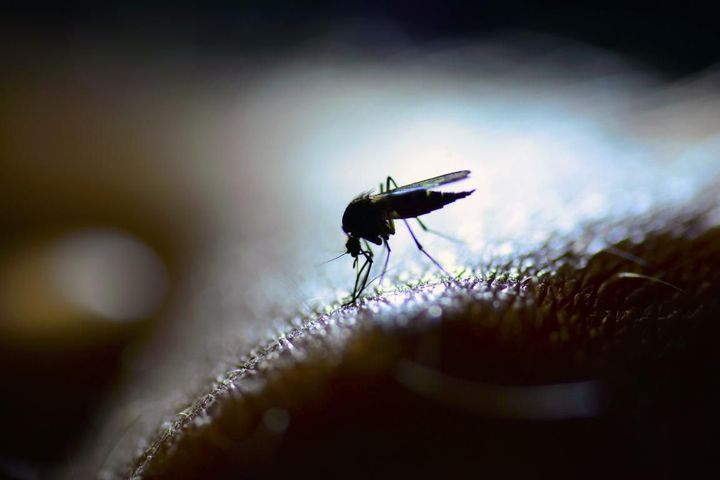 peau a moustique