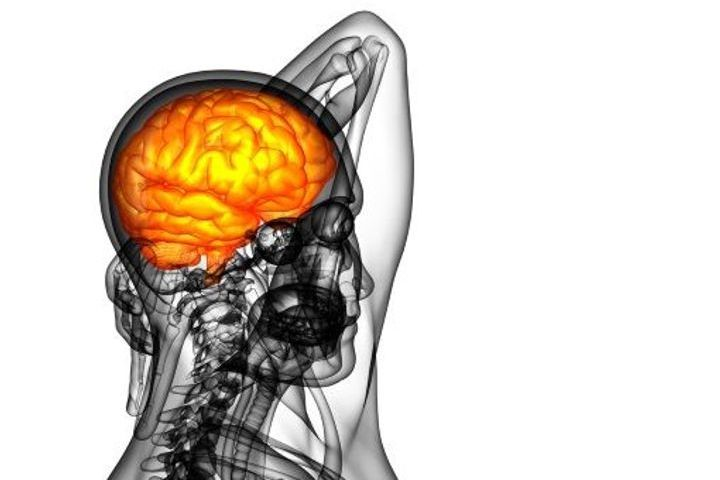 Hypophyse - cerveau