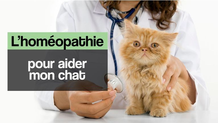 chat homéopathie