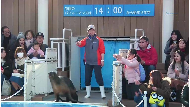 Le zoo de Tokyo nous offre un spectacle craquant pour la Saint-Valentin