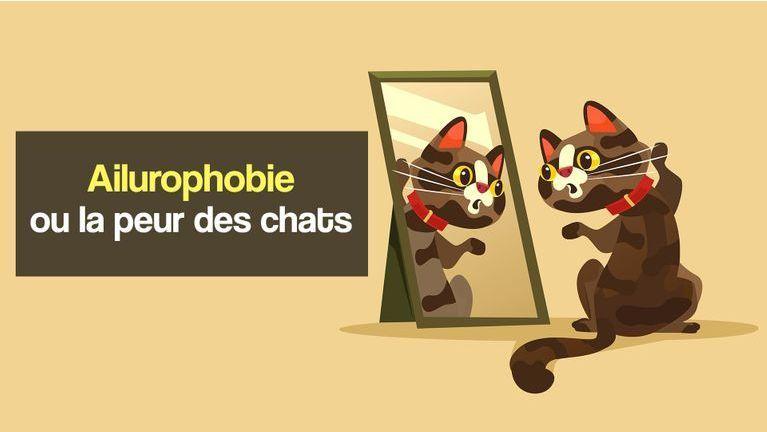 ailurophobie ou la peur des chats