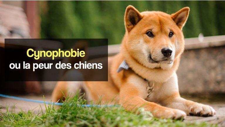 cynophobie peur des chiens