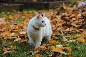 Asthme du chat : comment aider votre compagnon ?